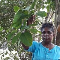 Mama Maria menunjukkan salah satu tumbuhan berkhasiat obat